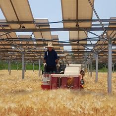영농형 태양광이 설치된 농지에서 농민이 트랙터를 운전하고 있다